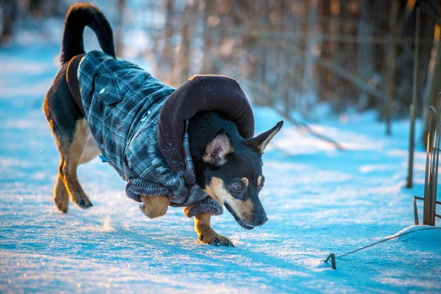 Why is my dog itchy in winter?
