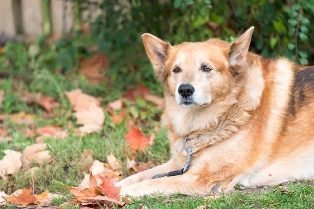 Why is my dog lethargic?