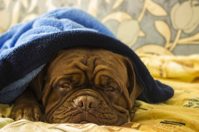 Why is my dog restless at night?