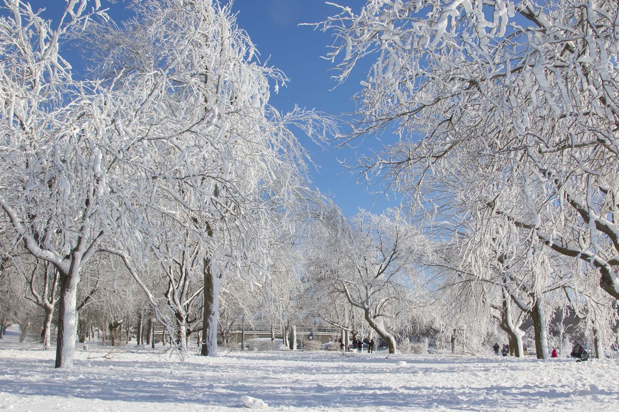Short Essay on Winter Season (587 Words)