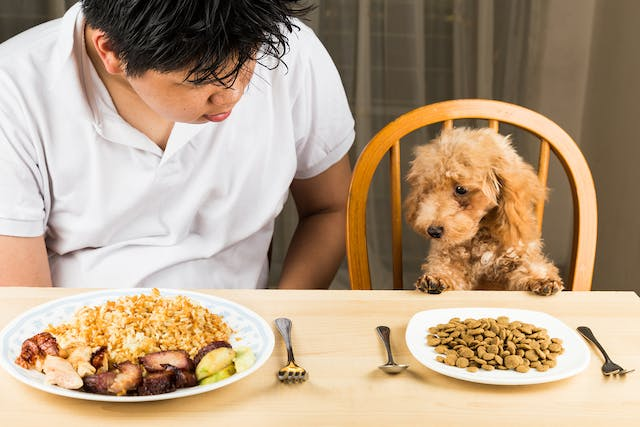Zinc Poisoning in Dogs - Symptoms, Causes, Diagnosis, Treatment, Recovery, Management, Cost