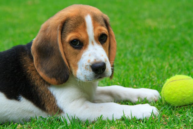Fluconazole for Dogs | Wag!