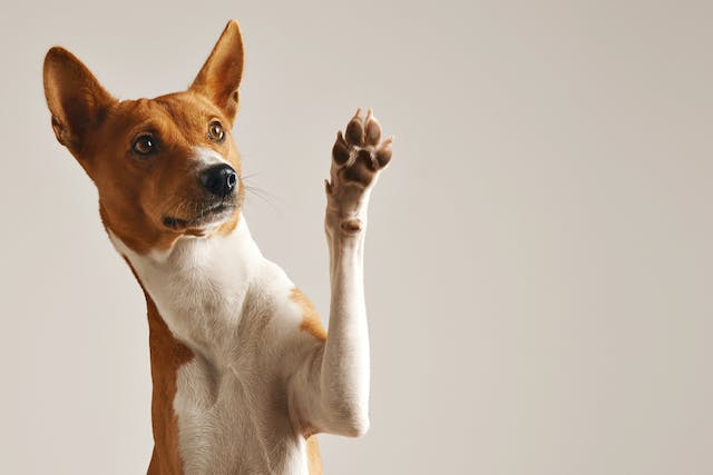 DL-Methionine for Dogs | Wag!