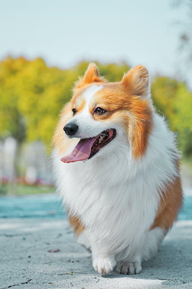Atropine for Dogs