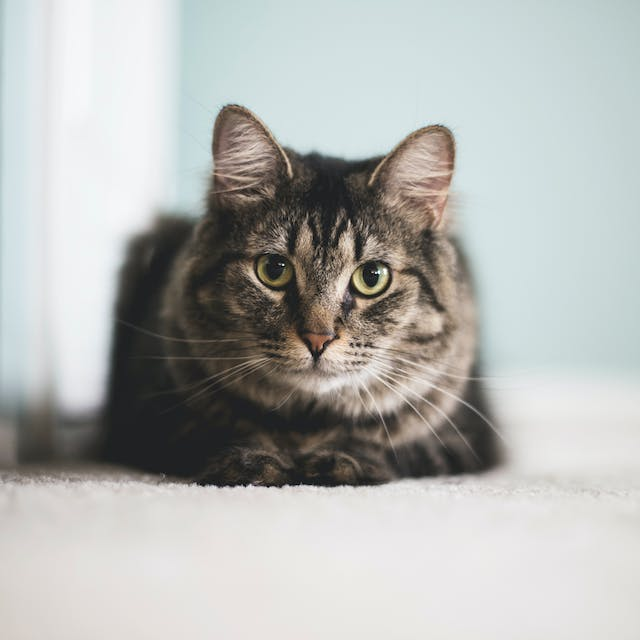 Food Aggression in Cats