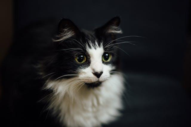 Terramycin for Cats