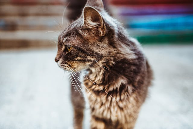 Atenolol for Cats