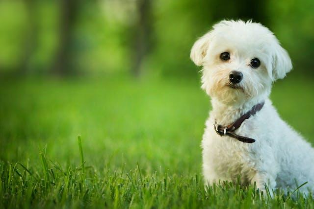 Nutmeg Poisoning in Dogs
