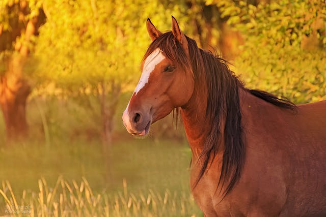 Abdominal Lavage in Horses - Conditions Treated, Procedure, Efficacy, Recovery, Cost, Considerations, Prevention