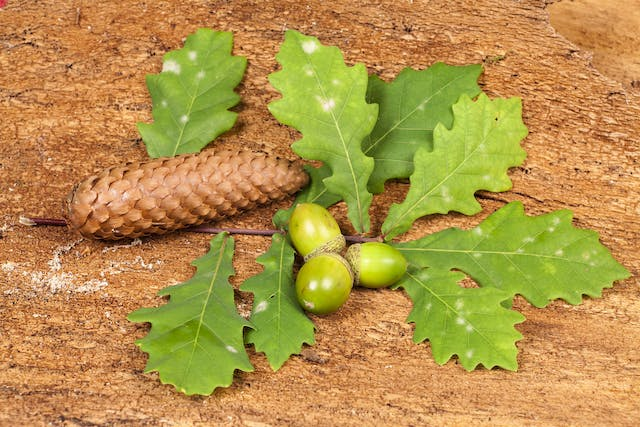 Acorn Poisoning in Horses - Symptoms, Causes, Diagnosis, Treatment, Recovery, Management, Cost