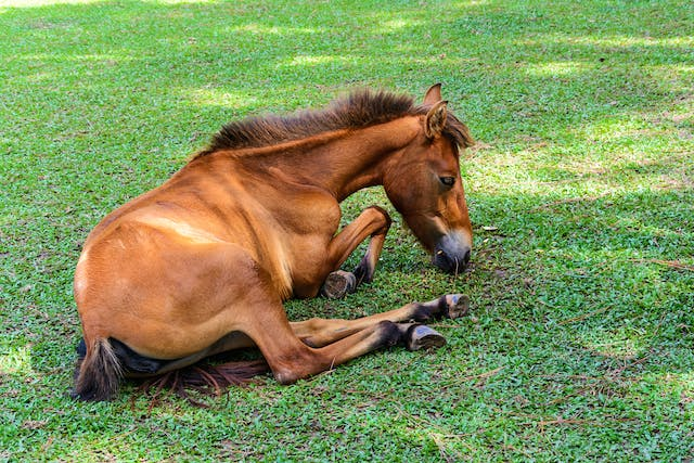 Acute Respiratory Distress Syndrome in Horses - Symptoms, Causes, Diagnosis, Treatment, Recovery, Management, Cost