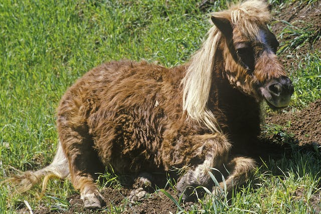 Aging in Horses - Symptoms, Causes, Diagnosis, Treatment, Recovery, Management, Cost