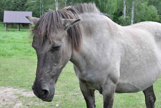 Allergies in Horses - Symptoms, Causes, Diagnosis, Treatment, Recovery, Management, Cost