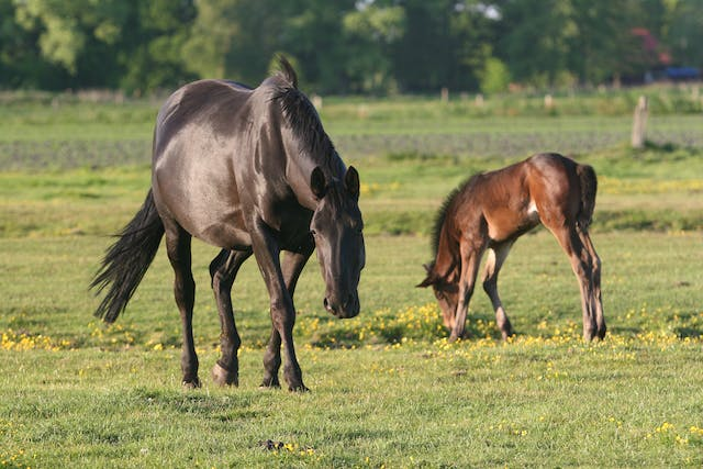 Annular Ligament Desmotomy in Horses - Conditions Treated, Procedure, Efficacy, Recovery, Cost, Considerations, Prevention