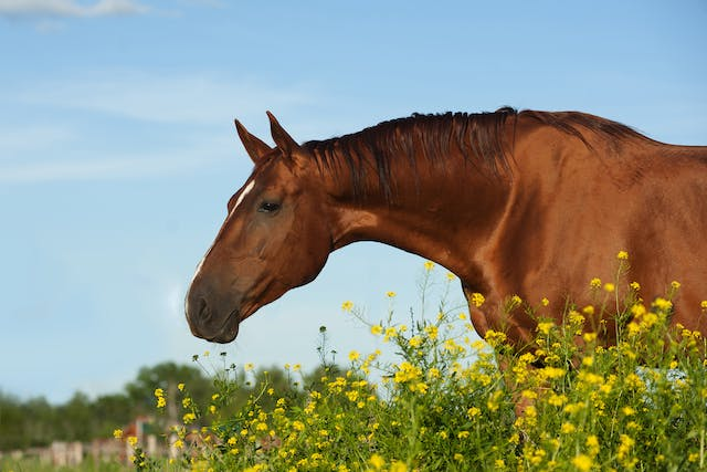 Arthroscopy of Joint in Horses - Conditions Treated, Procedure, Efficacy, Recovery, Cost, Considerations, Prevention