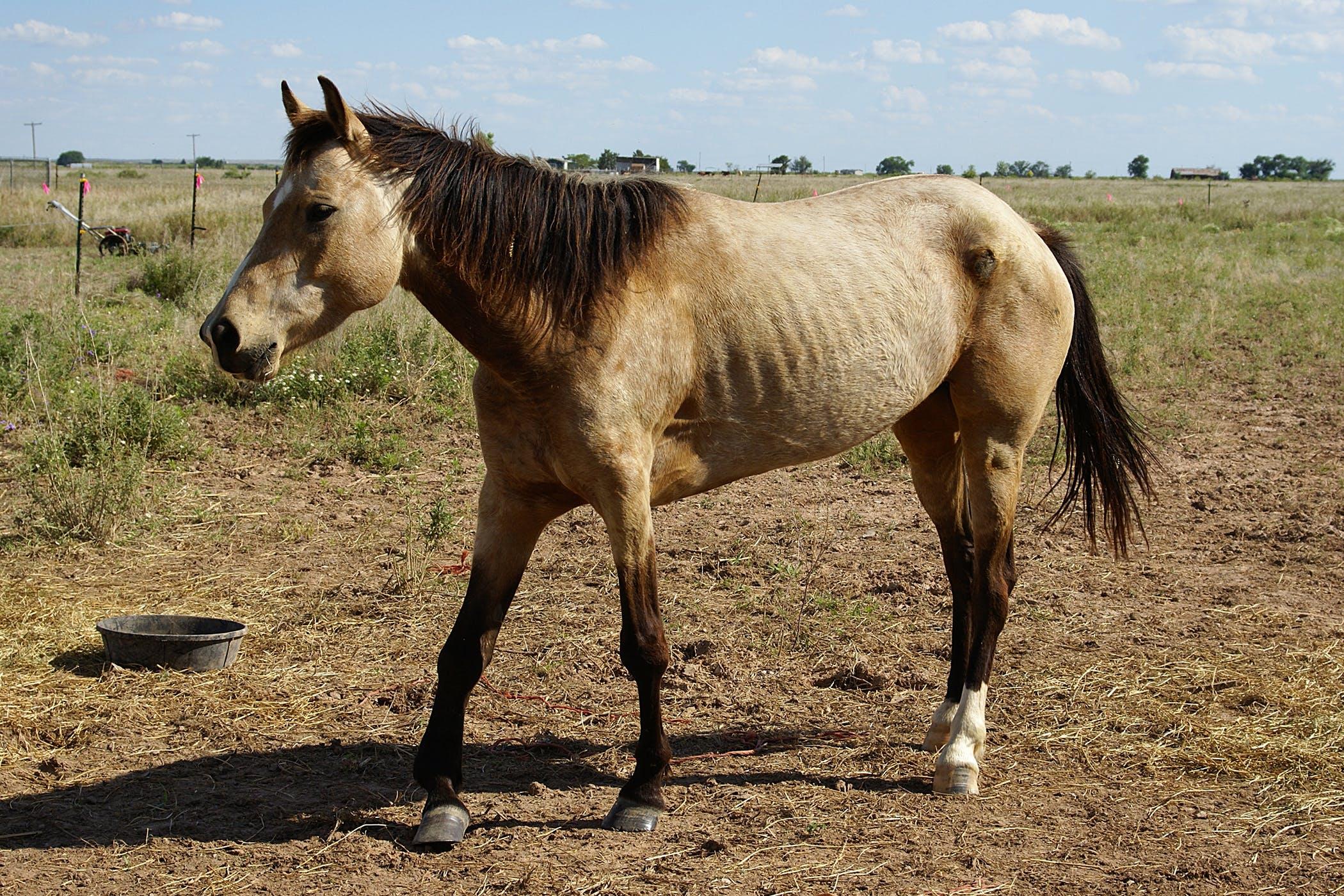 Aspiration Pneumonia in Horses - Symptoms, Causes, Diagnosis