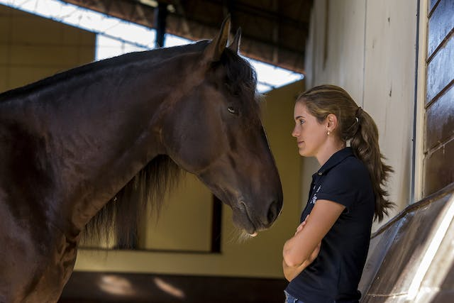 Atrial Fibrillation in Horses - Symptoms, Causes, Diagnosis, Treatment, Recovery, Management, Cost