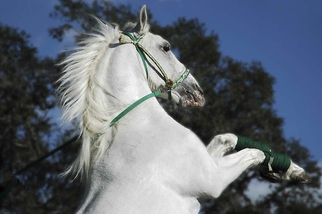 Bacterial Diarrhea (Foals) in Horses - Symptoms, Causes, Diagnosis, Treatment, Recovery, Management, Cost