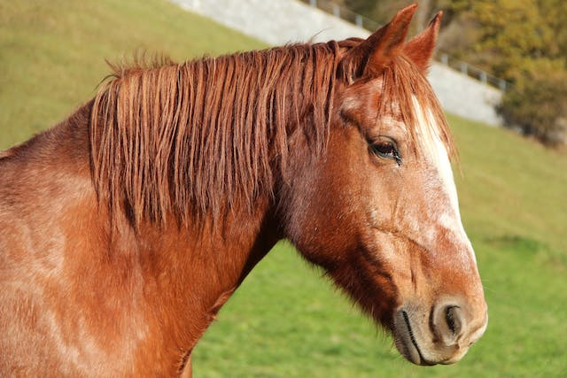 Banamine Allergy in Horses - Symptoms, Causes, Diagnosis, Treatment, Recovery, Management, Cost