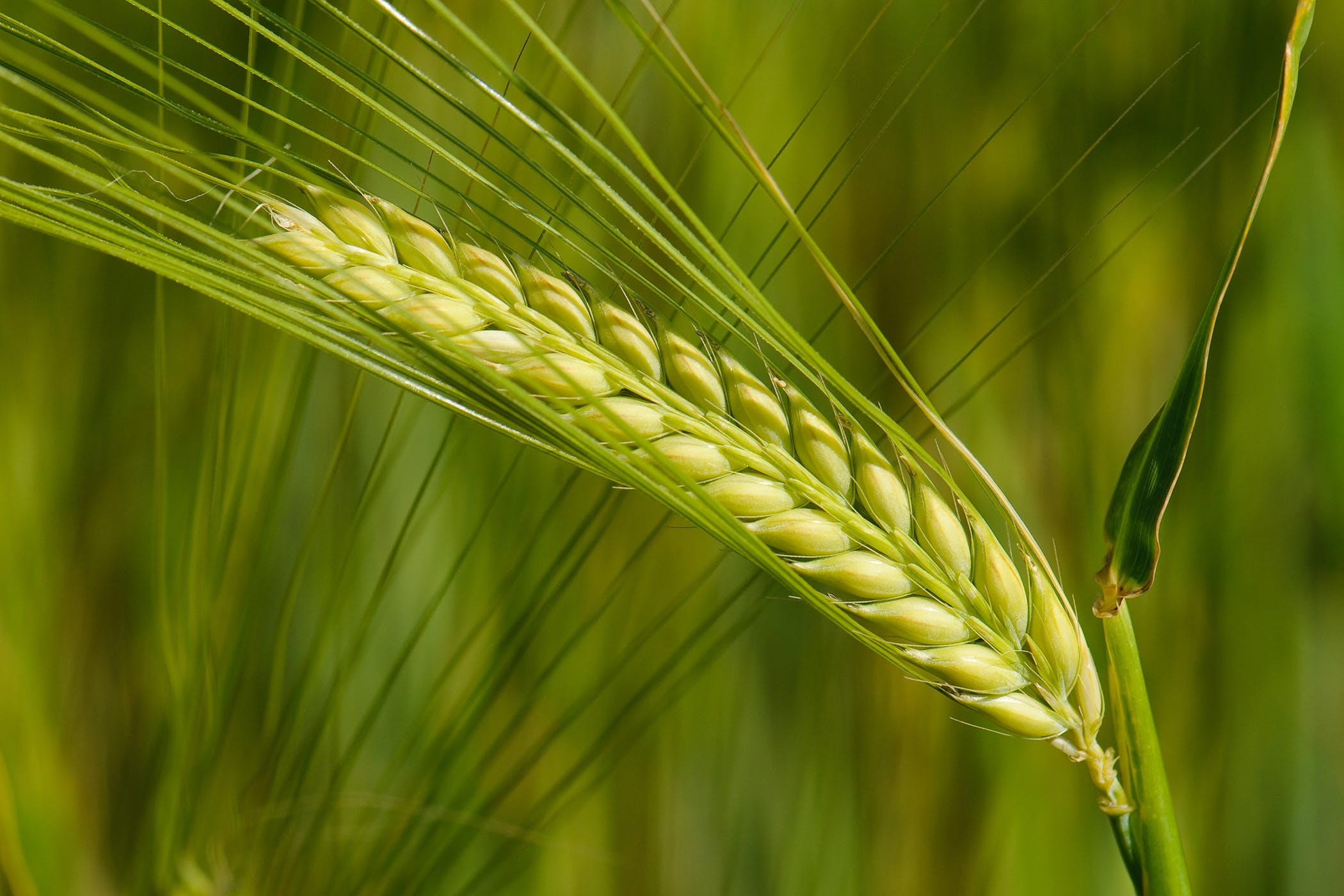 Can Food Allergies Cause Hair Loss