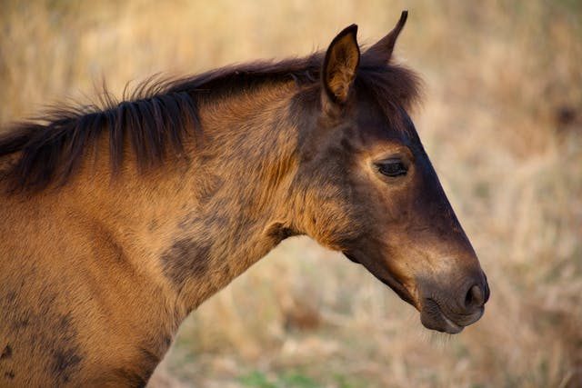 Bee Sting Allergy in Horses - Symptoms, Causes, Diagnosis, Treatment, Recovery, Management, Cost