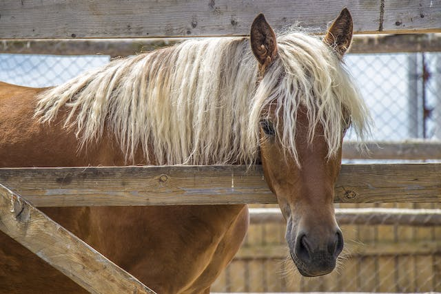 Behavioral Modification in Horses - Conditions Treated, Procedure, Efficacy, Recovery, Cost, Considerations, Prevention