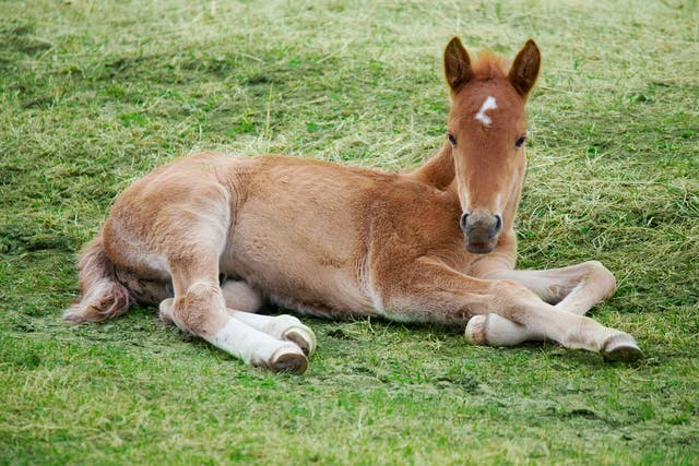Bone Fragility Syndrome in Horses - Symptoms, Causes, Diagnosis, Treatment, Recovery, Management, Cost
