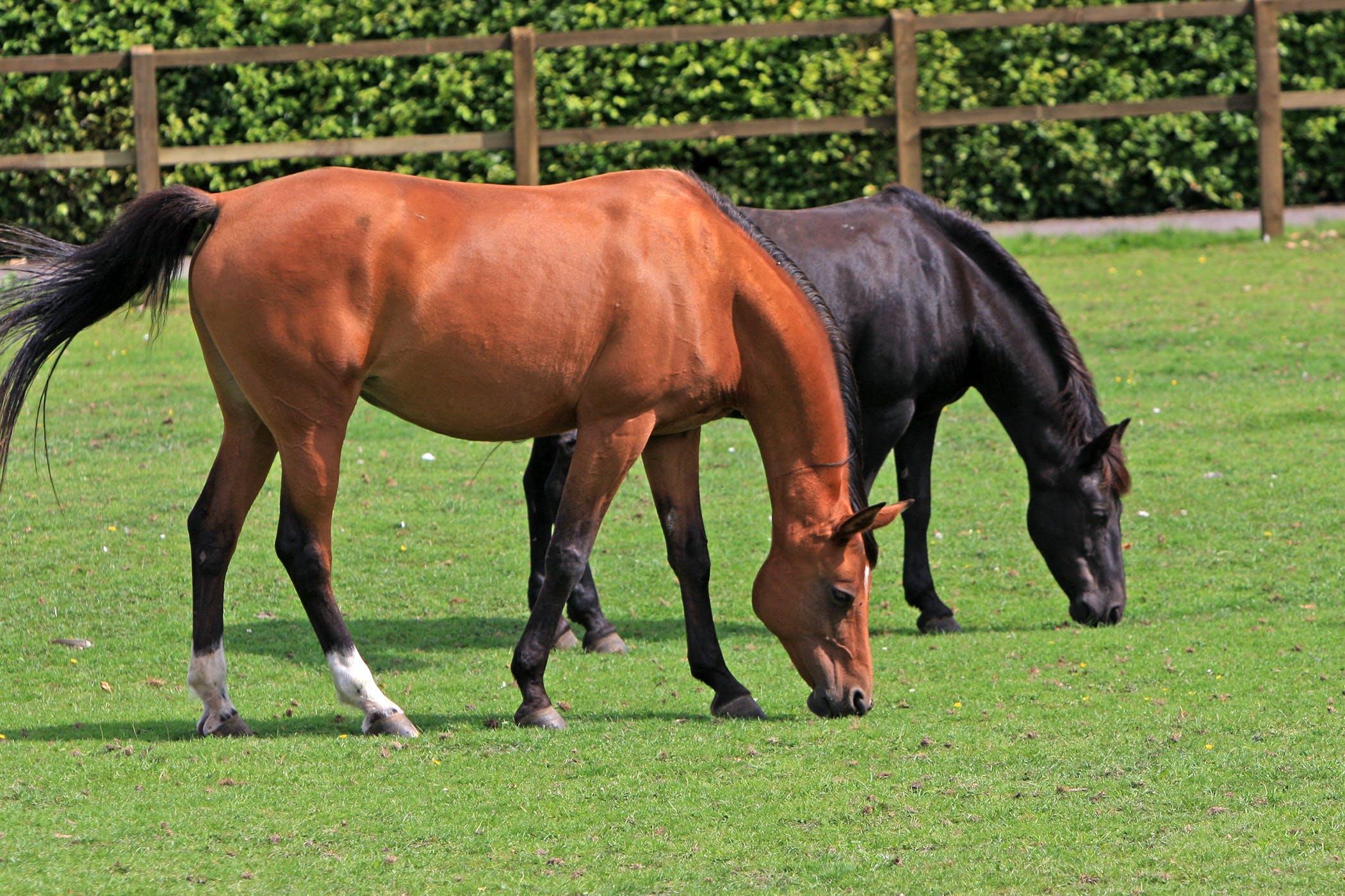 Borna Disease in Horses - Symptoms, Causes, Diagnosis ...
