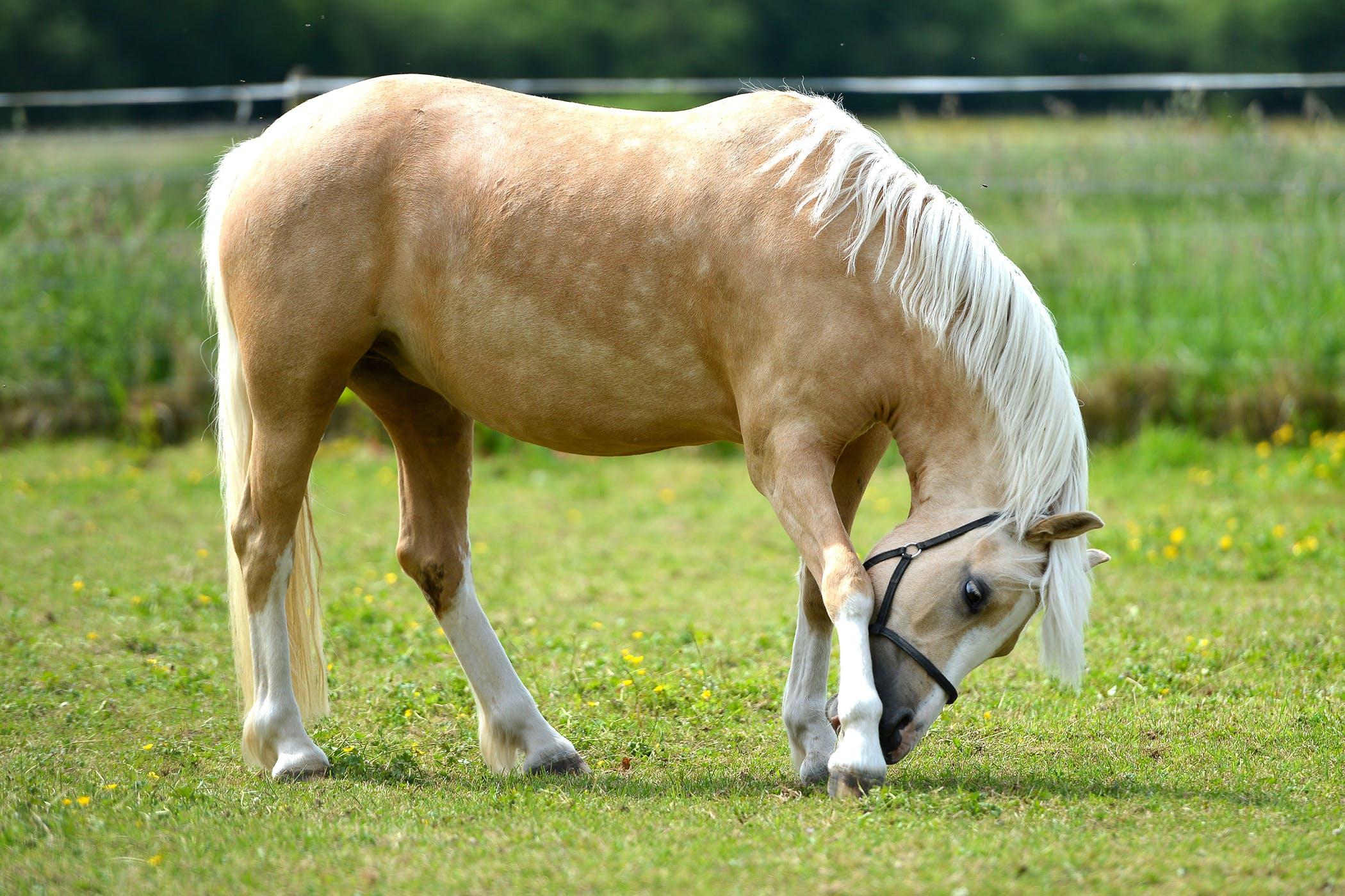 Bot Flies in Horses - Symptoms, Causes, Diagnosis, Treatment