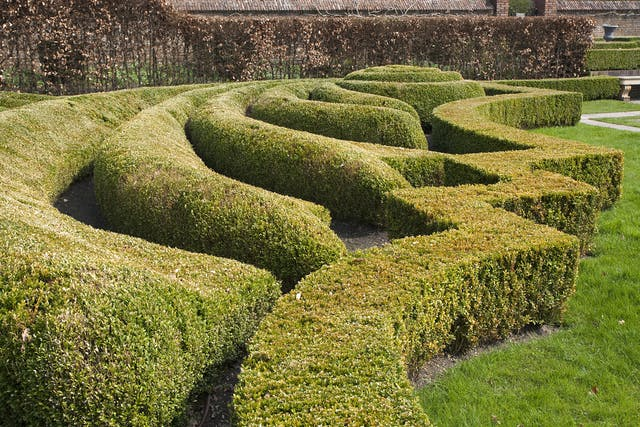 Boxwood Poisoning in Horses - Symptoms, Causes, Diagnosis, Treatment, Recovery, Management, Cost