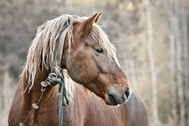 Bran Disease in Horses - Symptoms, Causes, Diagnosis, Treatment, Recovery, Management, Cost