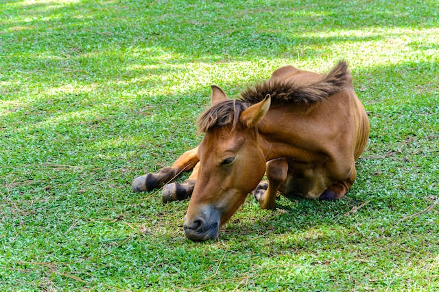 Broken Bones in Horses - Symptoms, Causes, Diagnosis, Treatment, Recovery, Management, Cost