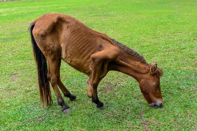 Brushing in Horses - Symptoms, Causes, Diagnosis, Treatment, Recovery, Management, Cost
