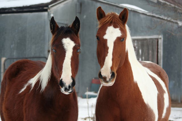 Bute Allergy in Horses - Symptoms, Causes, Diagnosis, Treatment, Recovery, Management, Cost
