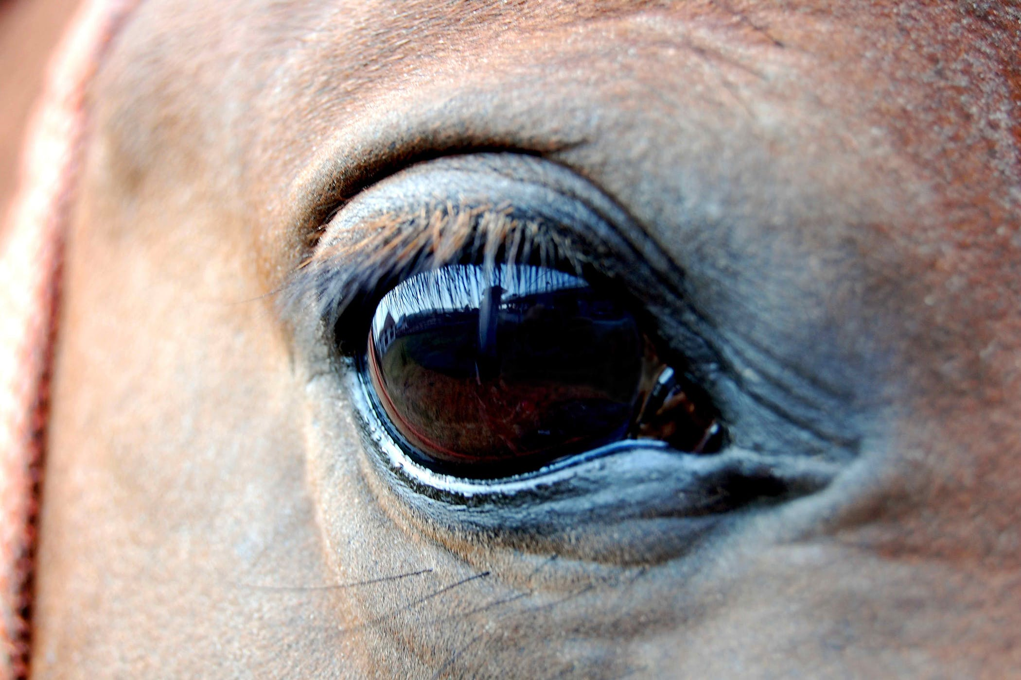 Cataracts In Horses Symptoms Causes Diagnosis Treatment