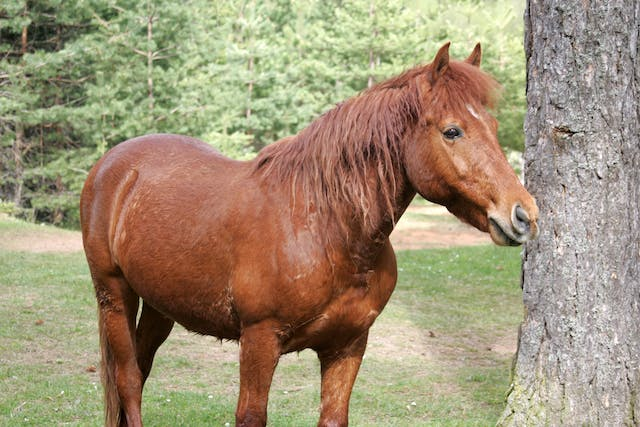 Chemical Fusion of Lower Hock Joints in Horses - Conditions Treated, Procedure, Efficacy, Recovery, Cost, Considerations, Prevention