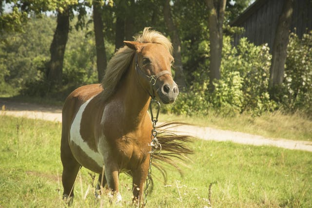 Chiropractic Manipulation in Horses - Conditions Treated, Procedure, Efficacy, Recovery, Cost, Considerations, Prevention
