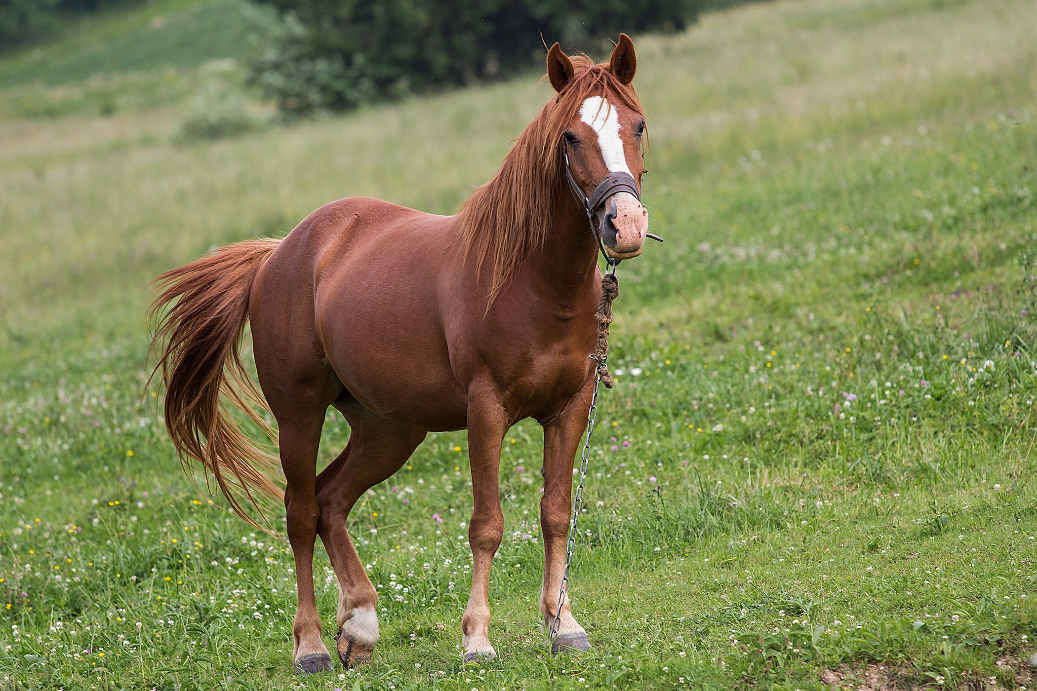 Cold Therapy in Horses - Procedure, Efficacy, Recovery