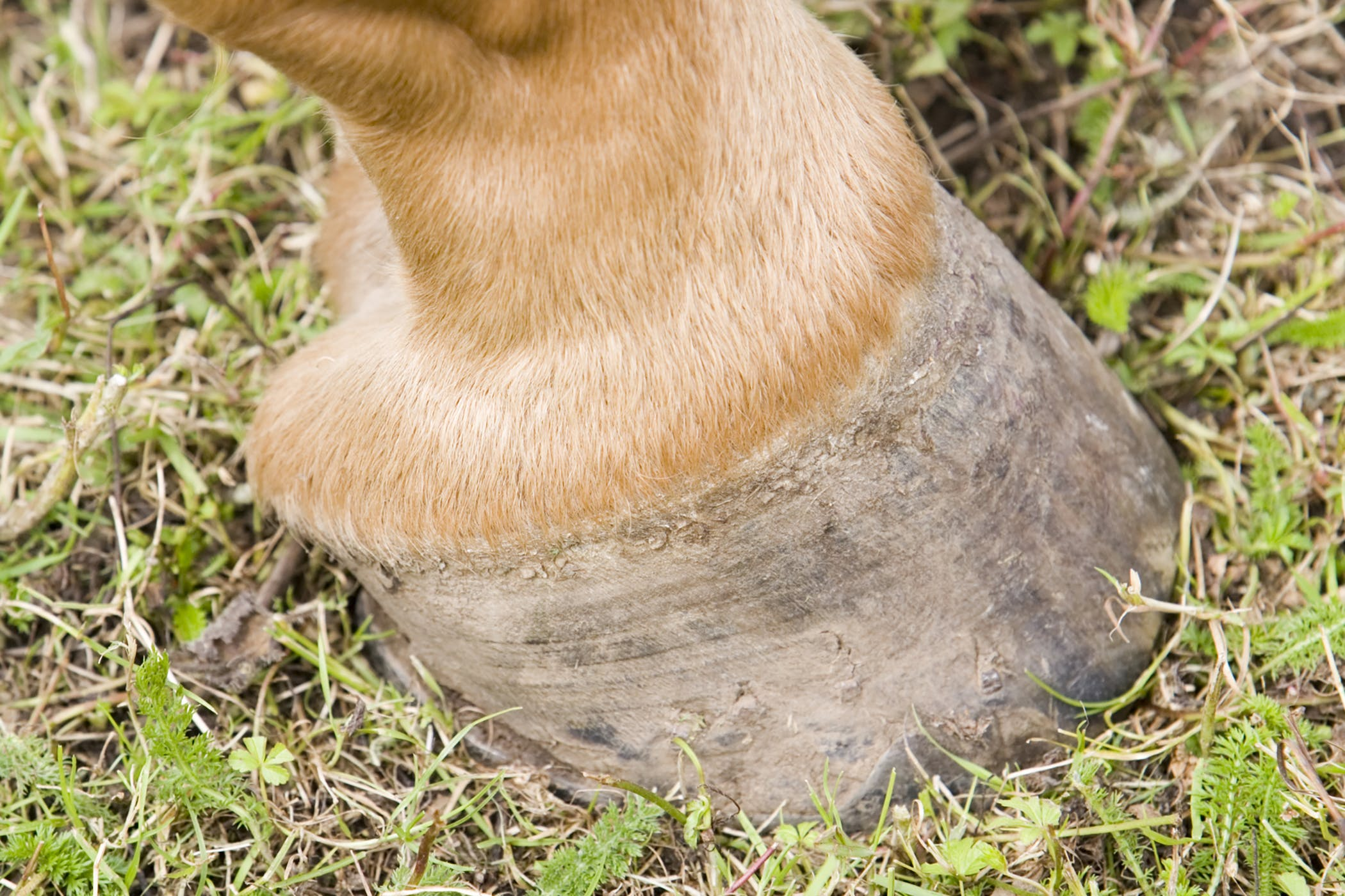 Collateral Ligament Injuries In Horses Symptoms Causes Diagnosis