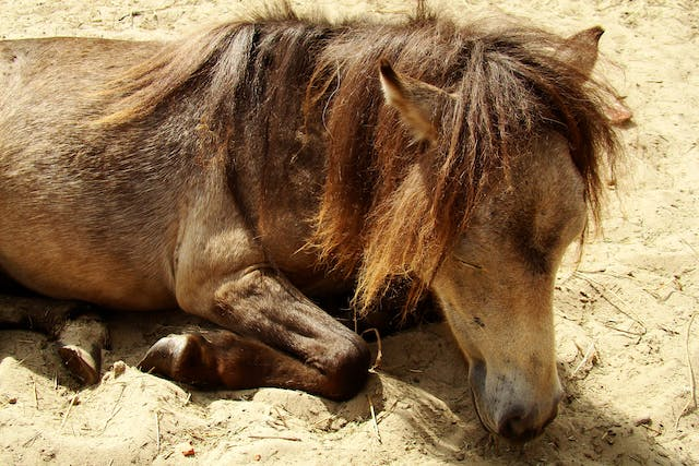 Contusions in Horses - Symptoms, Causes, Diagnosis, Treatment, Recovery, Management, Cost