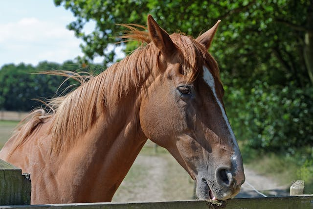Cribbing in Horses - Symptoms, Causes, Diagnosis, Treatment, Recovery, Management, Cost