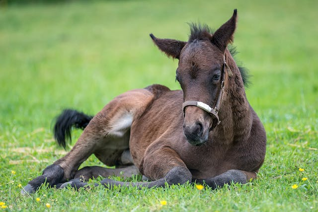 Desmitis of the Collateral Ligaments of the Leg in Horses - Symptoms, Causes, Diagnosis, Treatment, Recovery, Management, Cost