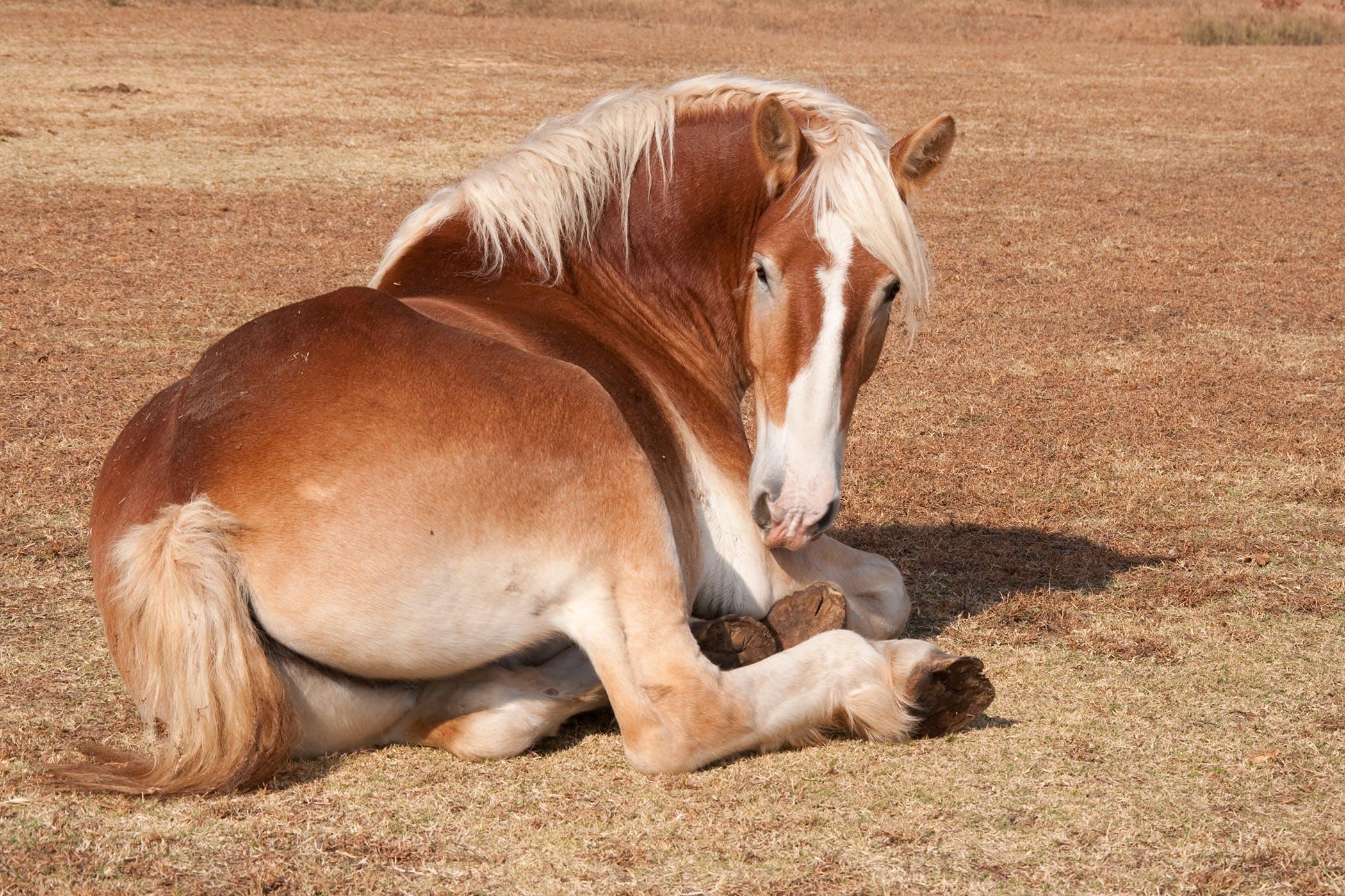 Developmental Orthopedic Disease In Horses