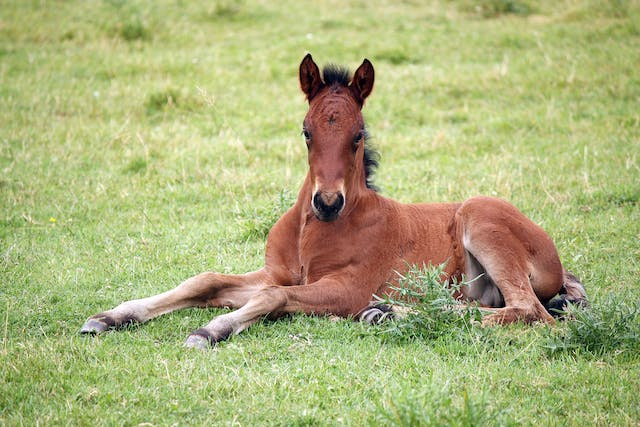 Diarrheal Disease (Bacterial) in Horses - Symptoms, Causes, Diagnosis, Treatment, Recovery, Management, Cost