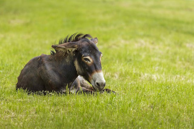 Diarrheal Disease in Horses - Symptoms, Causes, Diagnosis, Treatment, Recovery, Management, Cost