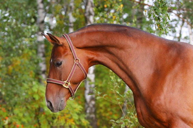 Drug Compounding in Horses - Symptoms, Causes, Diagnosis, Treatment, Recovery, Management, Cost