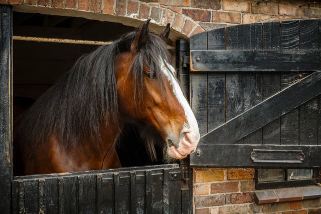 Facial Paralysis in Horses - Symptoms, Causes, Diagnosis, Treatment, Recovery, Management, Cost