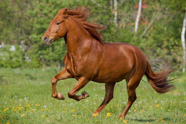 Flexural Deformities in Horses - Symptoms, Causes, Diagnosis, Treatment, Recovery, Management, Cost