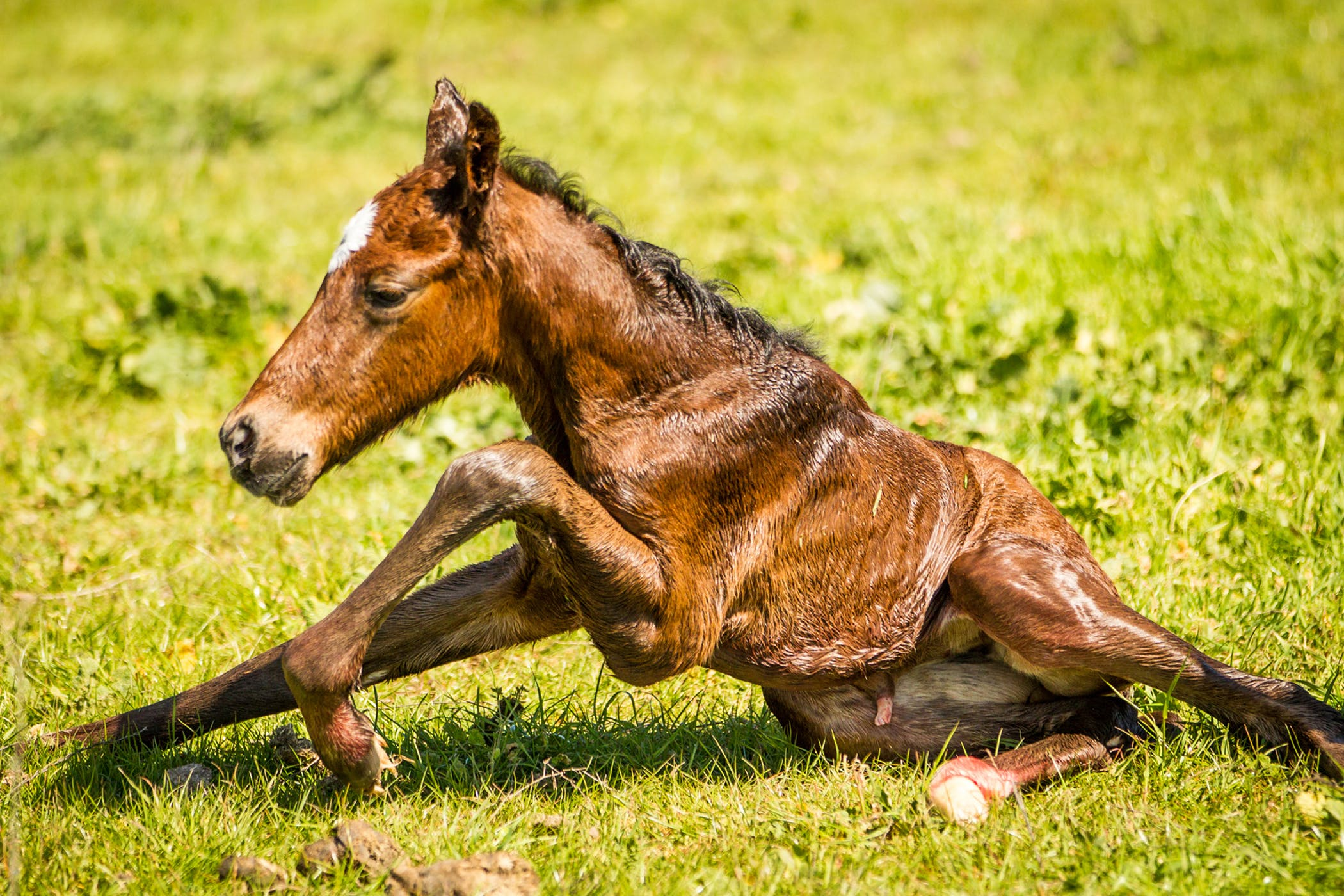 Founder In Horses Symptoms Causes Diagnosis Treatment