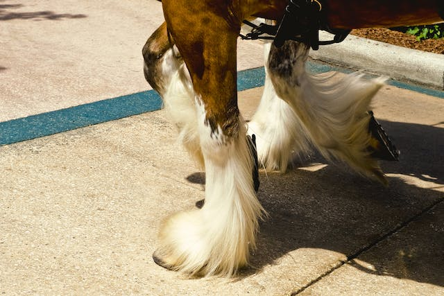 Fracture of the Navicular Bone in Horses - Symptoms, Causes, Diagnosis, Treatment, Recovery, Management, Cost